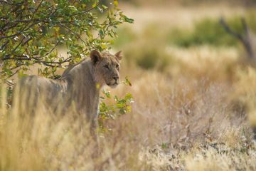 Kleingruppenreise Namibia und Botswana