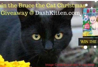 Bruce the Cat Banner