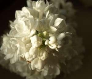 春季养生吃什么好3种豆子不可少茉莉果