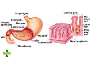 Triệu chứng viêm dạ dày cấp