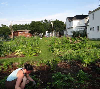 Urban agriculture programs providing assistance in reclaiming vacant lots for growing food and beautification