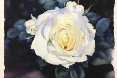 黄有维教程阳光树影中的白玫瑰详细水彩步骤