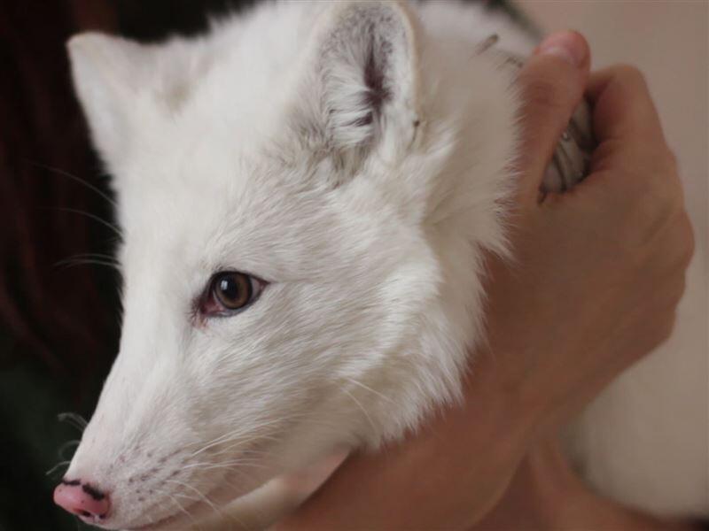Bild zu Liza rettete ihn vor der Pelzfabrik und am Ende wurde Sima zu ihrem liebsten Mitbewohner.