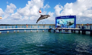 The Jardines del Rey dolphinarium features performances by the intelligent mammals.