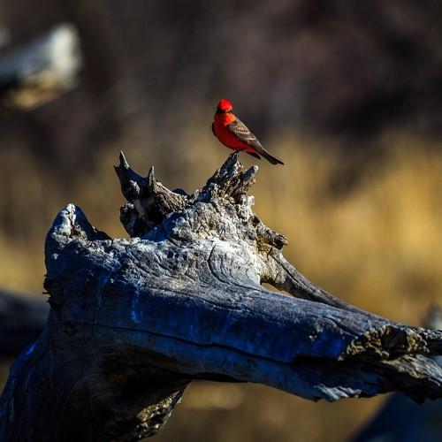 Bird--Square.jpg