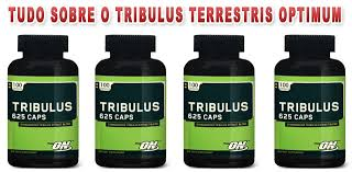Tribulus Terrestris: para que serve?