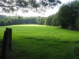 wide green pastures ireland
