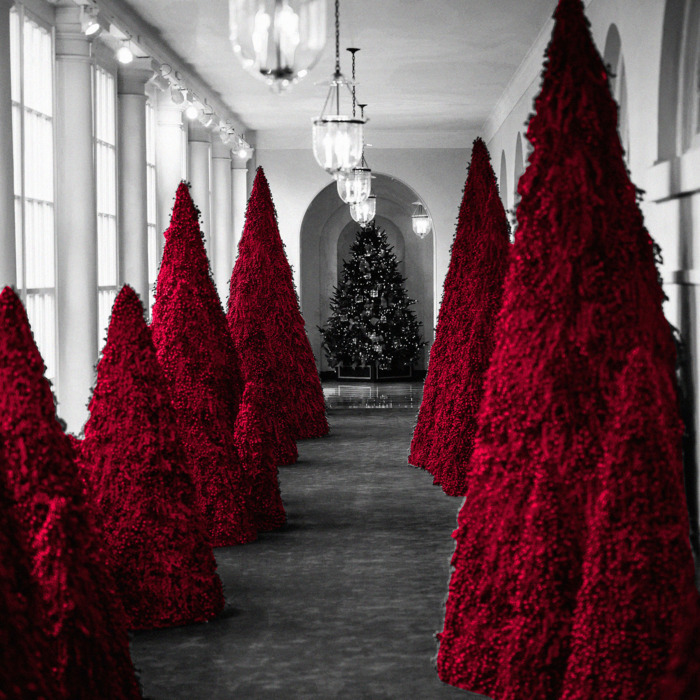 Image result for picture of red christmas trees at white house