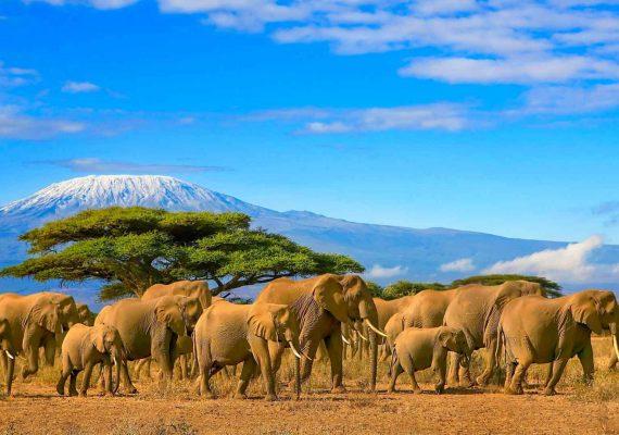 Sicherheit auf Kenia Reisen