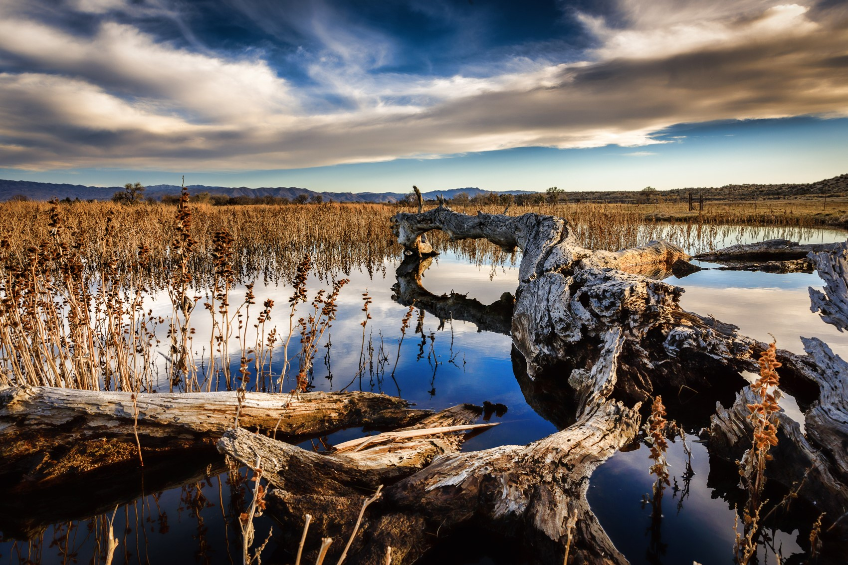 lake with driftwood