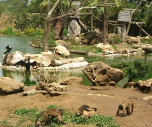 Zoo Lagos - a great family day out not far from Silves