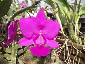 orquideas_raras_feiticeira