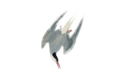 Promo image for The Tern