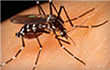 New Clues Why Mosquitoes Find You Irresistible