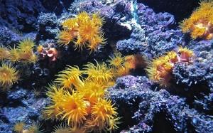 Coral Reef Virgin Islands 1972