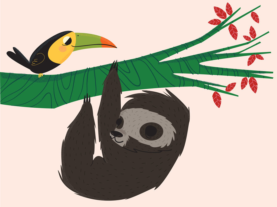 Sloth and Toucan