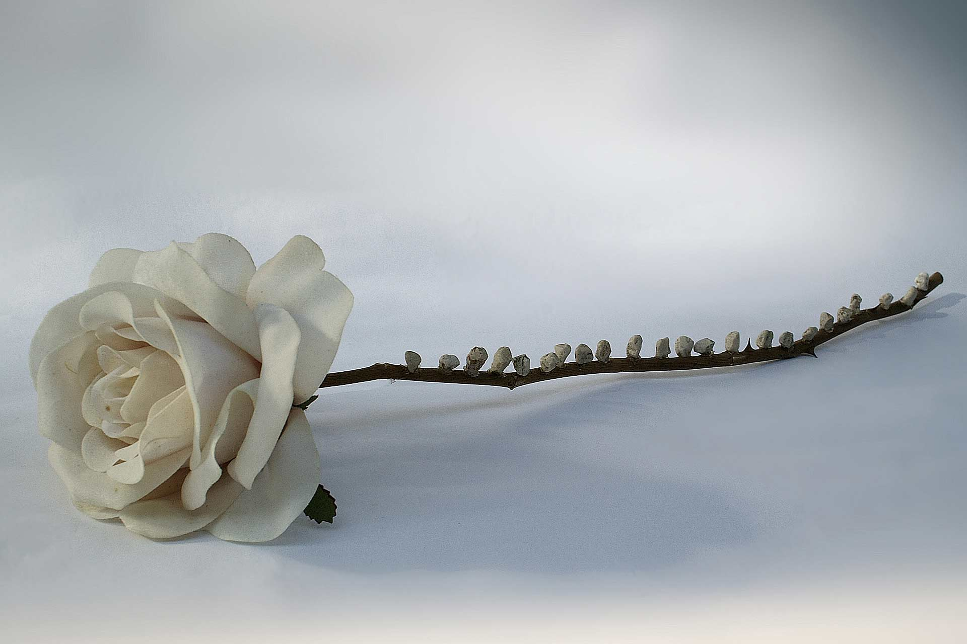 A rose has 23 teeth 2007, mixed media installation