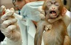Monkey_being_vaccinated