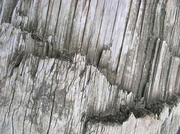 texture_wood