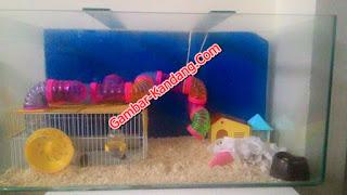 Kreasi Kandang Hamster Model Akuarium Dan Aksesorisnya