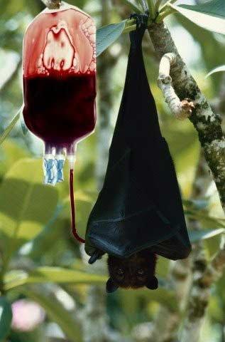 Летучие мыши: мифы, легенды, суеверия