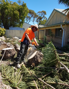 Stump Removal in Perth