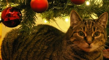 Keeping Your Pet Safe and Healthy Around The Holidays