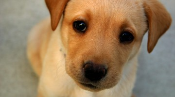 Vitamin E: Another Tool to Help Treat Canine Atopic Dermatitis