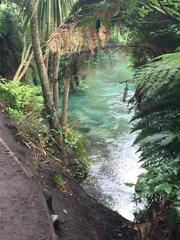 ferns and water at Blue Pools by Slater Chartered Accountants