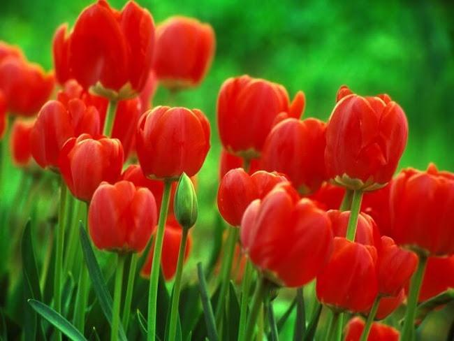 Florist Kwinana Beach: Prominent Flowers Marketed Nowadays