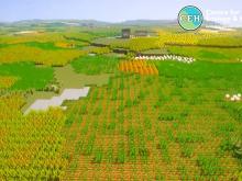 Still from CEH Minecraft showing a farmed landscape