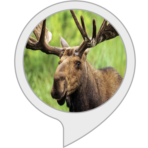 Skills for Kids. Moose Facts