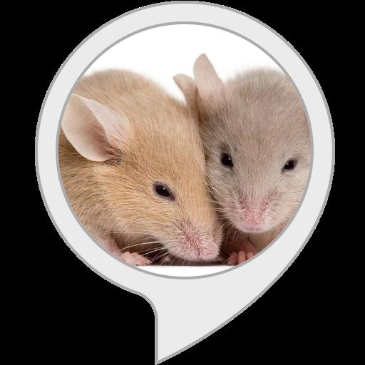 Rat fact