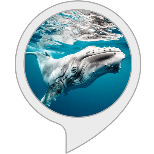 Ambient Sounds. Underwater Whale Sounds