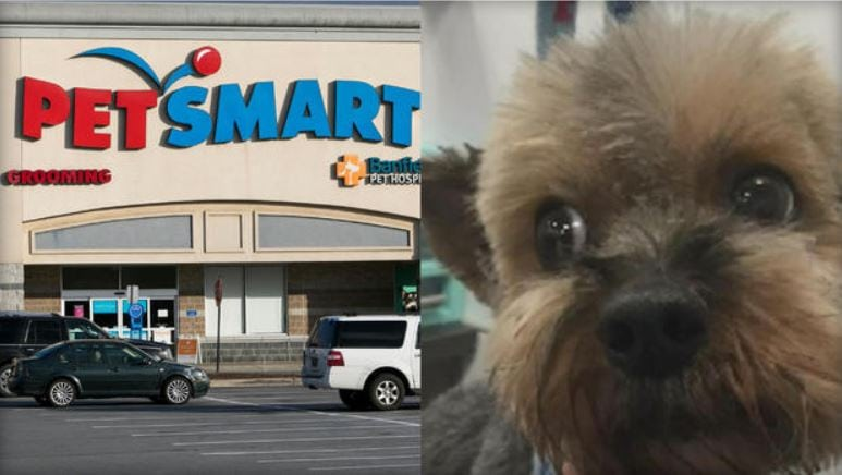 Investigation finds 47 dogs died after grooming at PetSmart over past decade