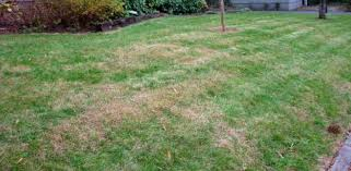 Image result for experts recommend against watering your lawn during the hottest part of the day