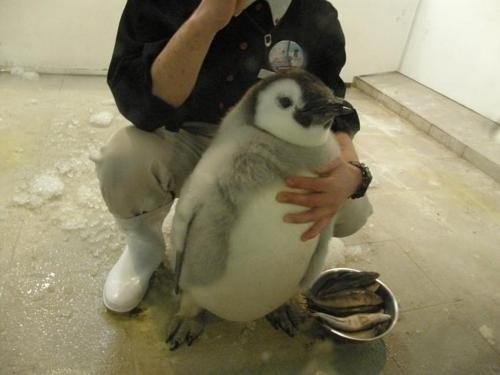 No matter how many times I've seen them, penguins are always the cutest.