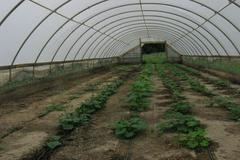 The hoop house is the cheapest option for greenhouses