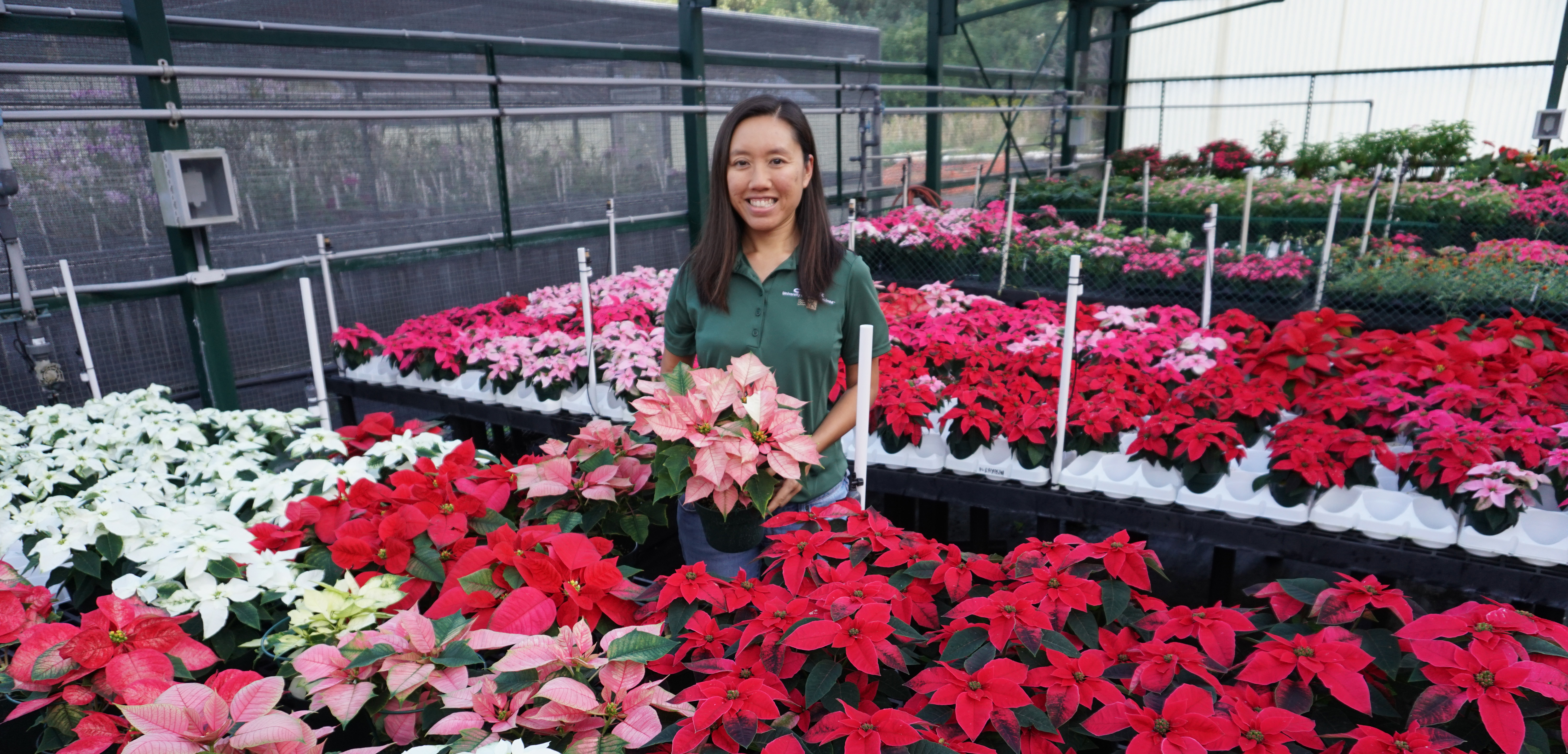CTAHR student holding a potted pink poinsettia inside a greenhouse.