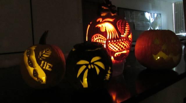 Four lit jack-o-lanterns