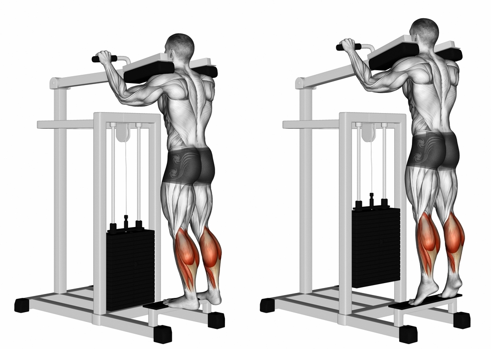 Image result for Calf Raises