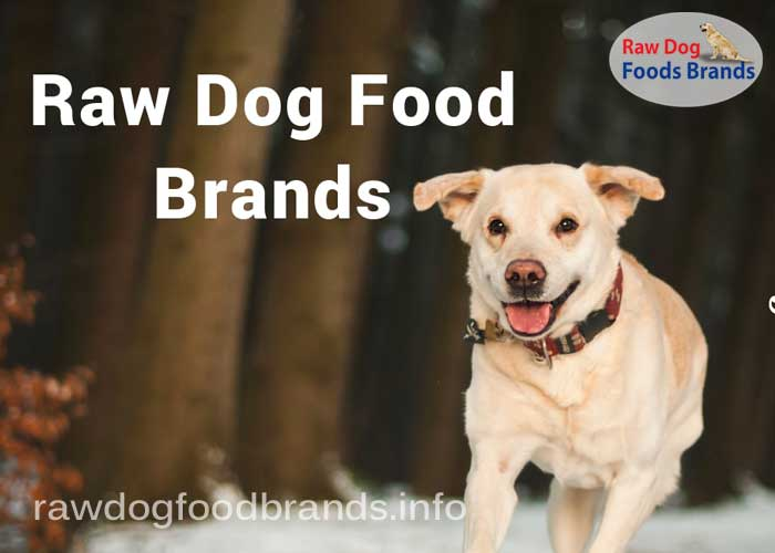 The Best Demandable Raw Dog Food Brands 2018