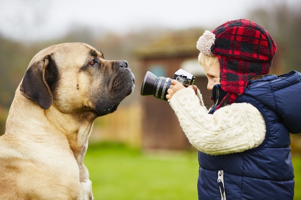 Safety Tips when Using the Best Pet Camera