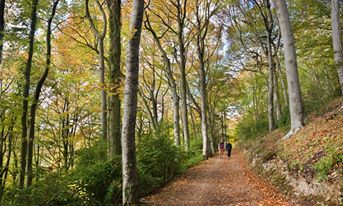 'Autumn's arrived at Woodchester Park.'
