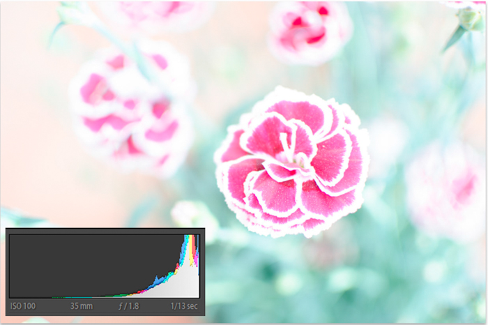 An underexposed flower image with histogram - ettr photography
