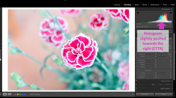 A screenshot of bringing down an overexposed pictured of a pink flower in Lightroom - ettr photography