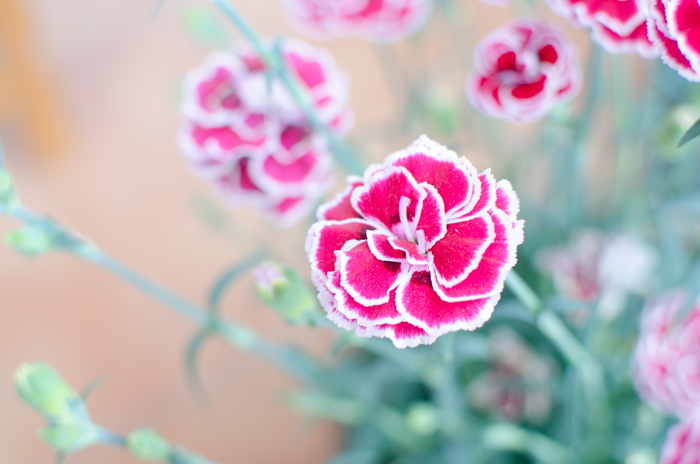An overexposed pictured of a pink flower - ettr photography
