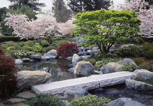 landscaping with cherry trees