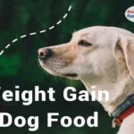 How to get the best weight gain dog food?
