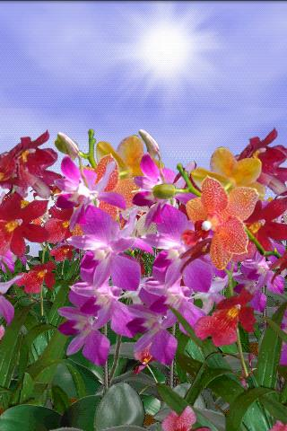 Orchids Live Wallpaper v1.01